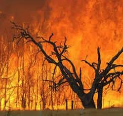 Bushfire Preparation